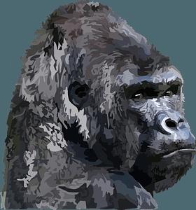 Gorilla Face clipart