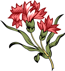 Two carnation blooms with leaves on single stem clipart