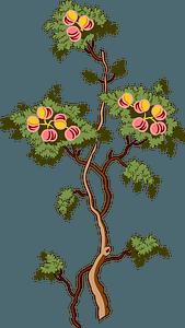 Fruit tree clipart