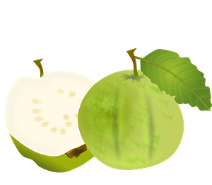 Two green apples clipart