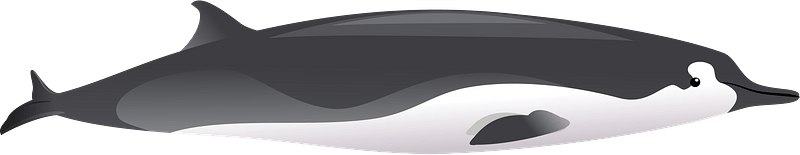 Spade-toothed whale clipart