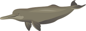 South-Asia River Dolphin clipart