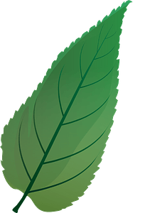 Common hackberry green leaf clipart