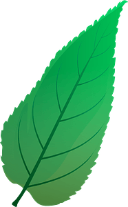 Common hackberry summer leaf clipart