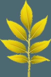 Arizona ash autumn leaf clipart