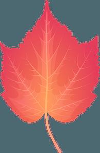 Mountain maple late autumn leaf clipart