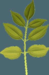 Texas ash autumn leaf clipart