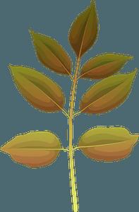 Texas ash late autumn leaf clipart