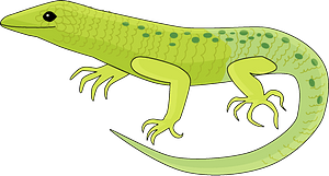 Lizardのクリップアート