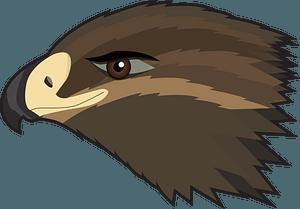 Hawk face clipart
