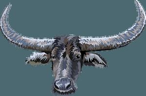 Longhorn face clipart
