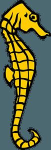 Seahorse clipart