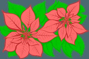 Poinsettiaのクリップアート