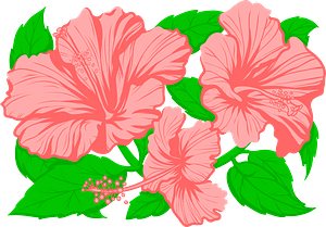 Hibiscusのクリップアート