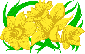 Daffodilのクリップアート