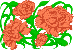 Carnation flowers clipart