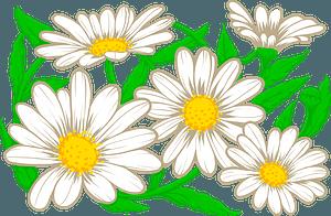 Daisyのクリップアート