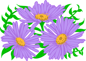 Aster clipart
