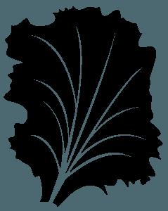 Salad silhouette