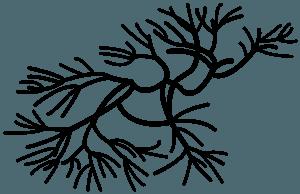 Seetang vektor silhouette