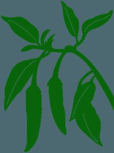 Chilipeber vektor silhuet