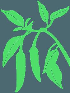 Peperoncino silhouette