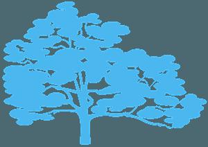 Carvalho branco silhueta vetor