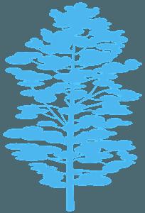 Pinho Branco silhueta vetor