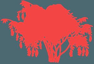 Virginischer Traubenkirschbaum vektor silhouette