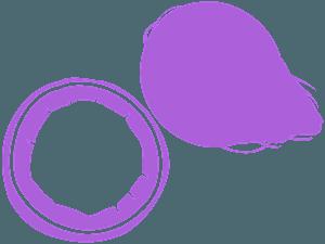 Kokosnuss vektor silhouette