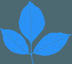 Fraxinus blad vector silhouet