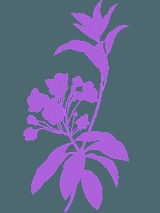 Laurel silhouette