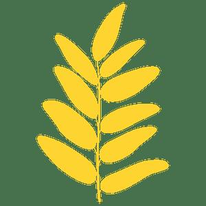 Honey locust leaf 실루엣