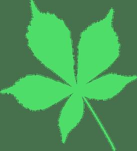 Horse chestnut leaf silhouette