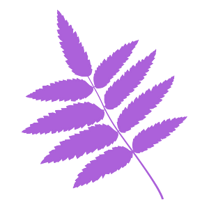 Rowan tree leaf silhouette