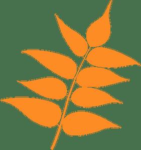Tree of heaven leaf silhouette