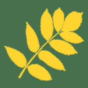 Ash tree leaf silhouette