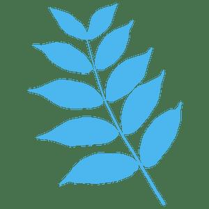 Black walnut leaf 실루엣