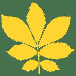 Bitternut hickory leaf 실루엣