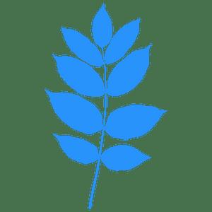 Black ash leaf silhouette