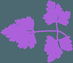 Petersilienblatt vektor silhouette