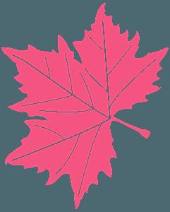 アメリカスズカケノキの葉 シルエット