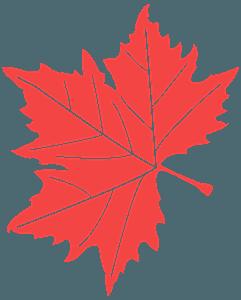 Liść jaworu - sylwetka wektorowa