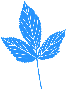 ミントの葉 シルエット