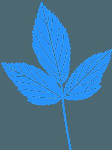 Muntblad vector silhouet