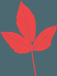 Mint Leaf silhouette