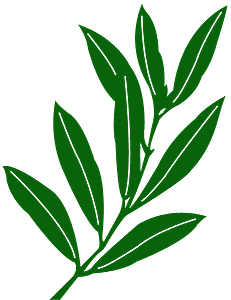 Olijfblad vector silhouet