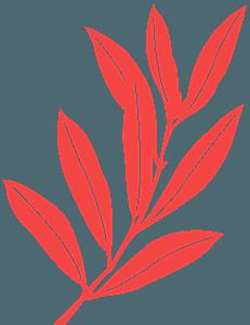 Liść oliwny - sylwetka wektorowa