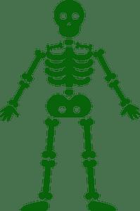 Skeleton - векторний силует