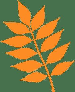 European ash leaf - векторний силует